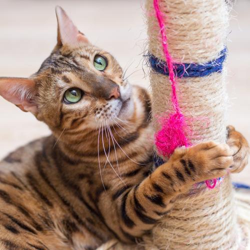 gato jugando con un rascador