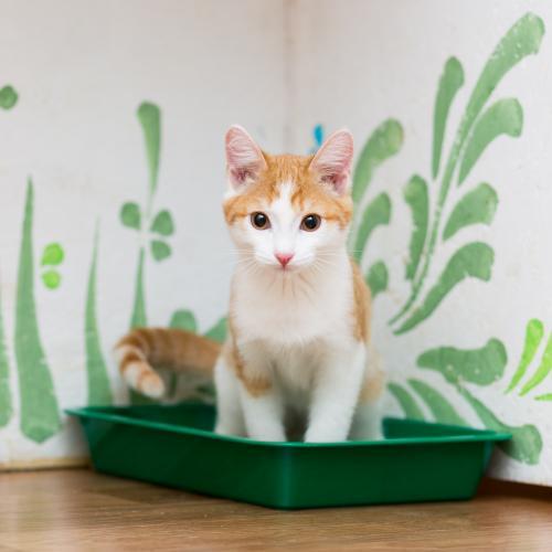 Tipos de bandejas sanitarias para gatos