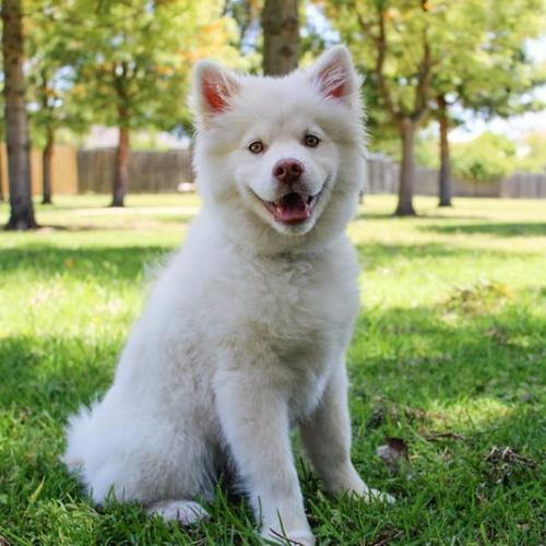 Esterilización de perros machos