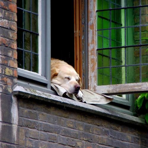 Tips para convivir con nuestra mascota en confinamiento