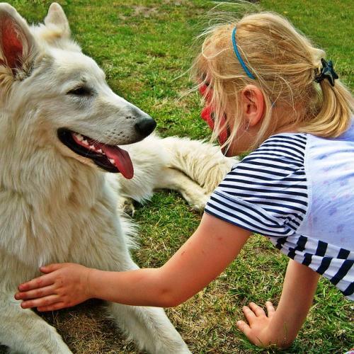 El perro, animal de compañía preferido de los españoles