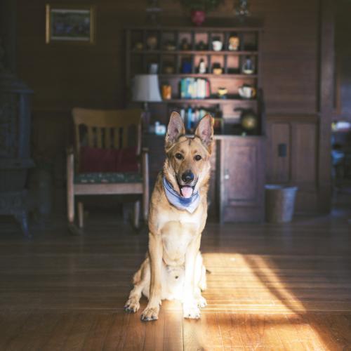 perro tranquilo en casa