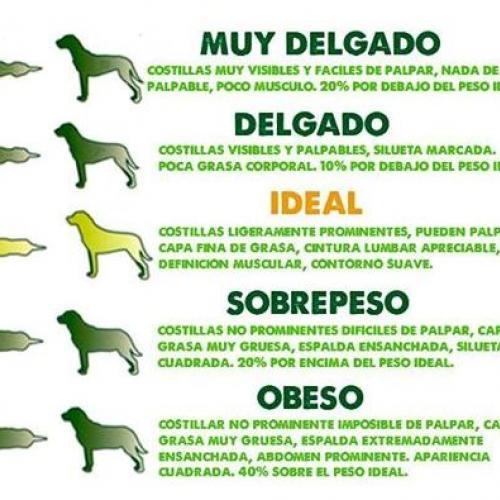 Peso perros