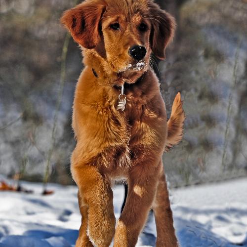 Cuidado articular para perros