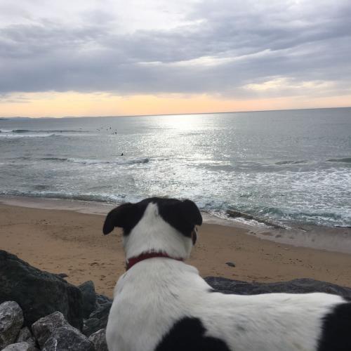 verano.con.perro