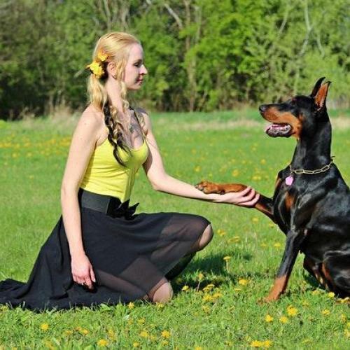 perro-entrenar